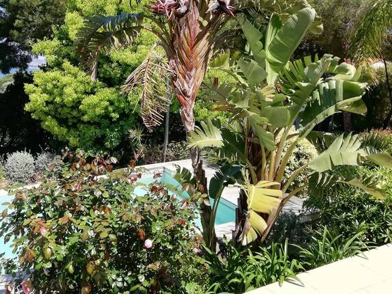 <i>Bananiers en bord de piscine</i>