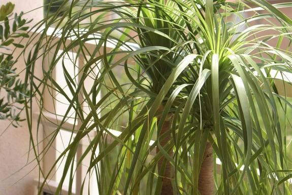 <i>Détail palmier</i>
